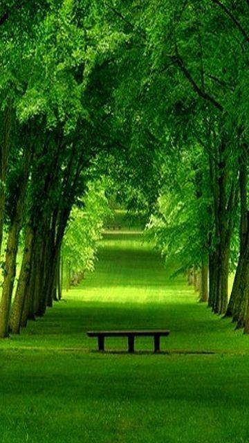 nature,360x640,640x360,wallpaper,background,n97,5800,5230,5530,x6