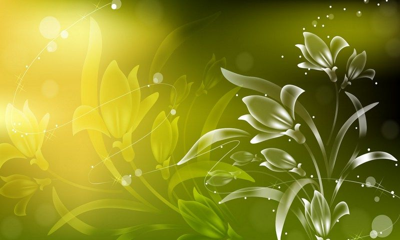 Abstract flowers,800x480,480x800,wallpaper,background