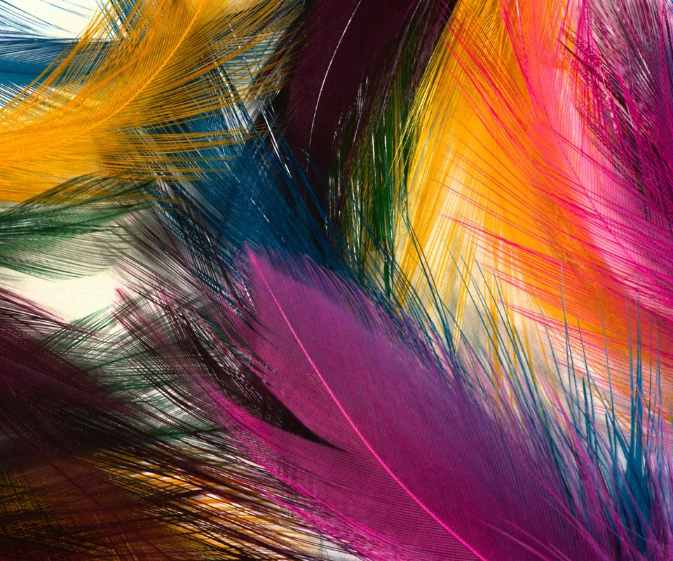 COLOURFUL TEATHERS,960x800,800x960,wallpaper,background