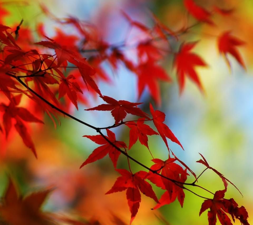 Wallpaper download dil - Fall Foliage 960x854 854x960 Wallpaper Background Download